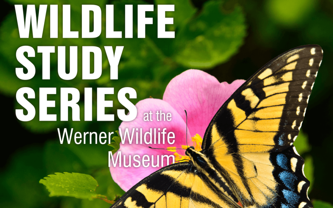 Wildlife and Water Sources Focus for August Wildlife Series