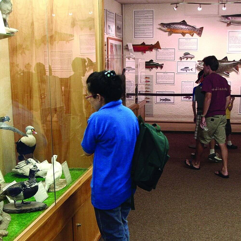 display cases with birds and fish inside a museum