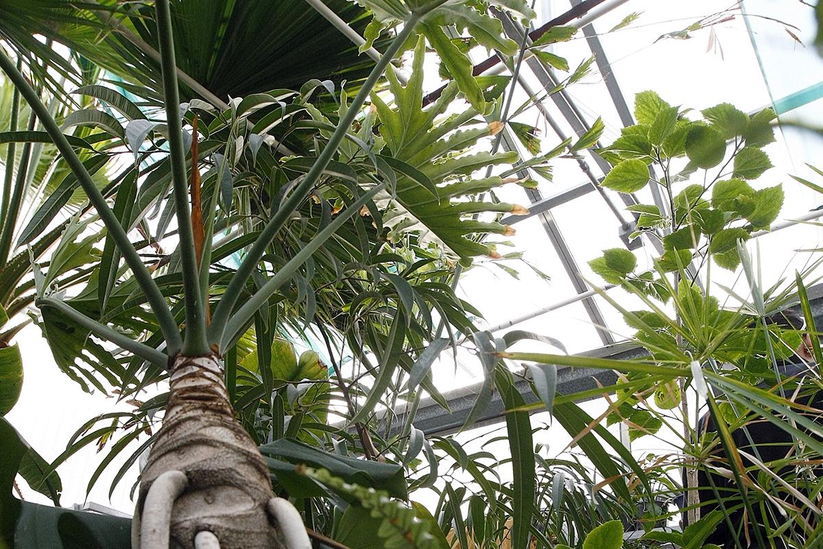 Casper College greenhouse