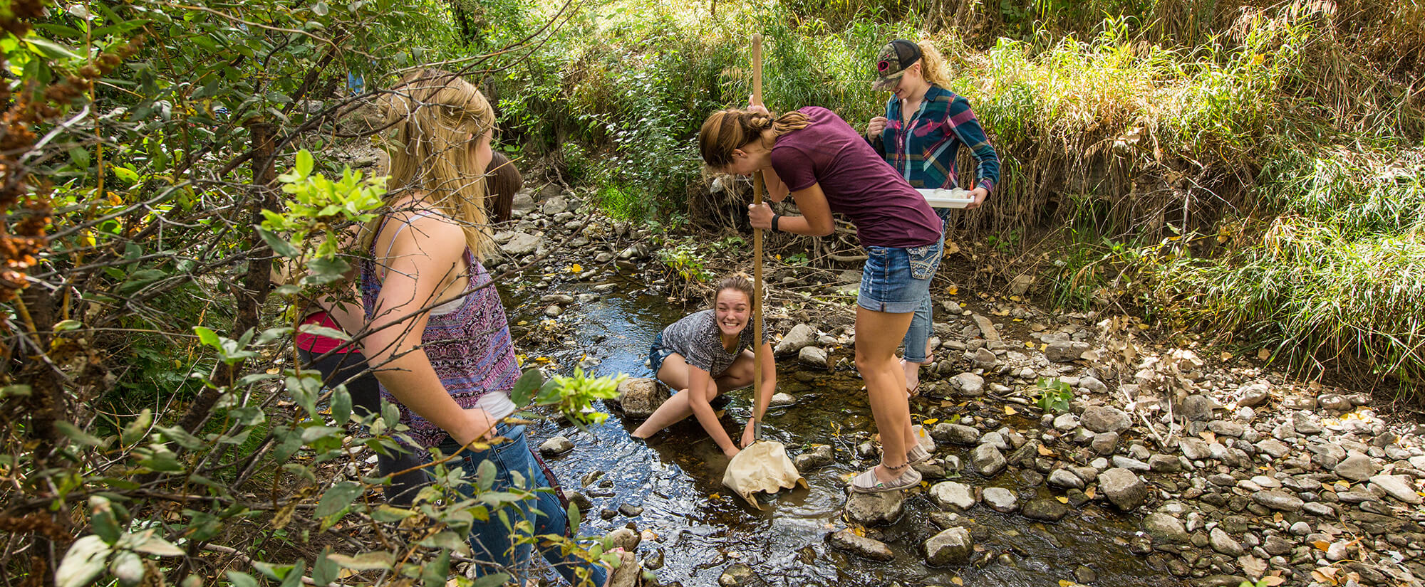 Students look for specimens in a stream near Casper Mountain.