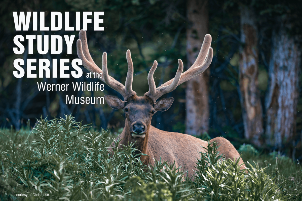Image for June wildlife series press release.