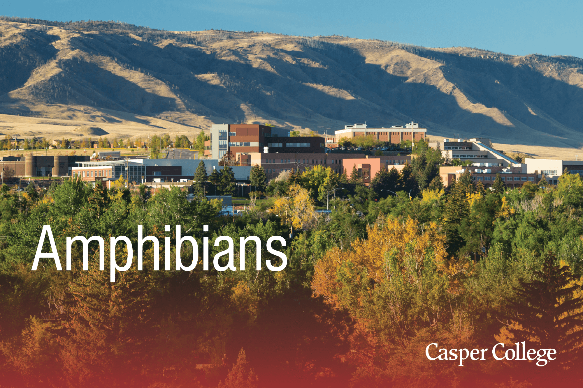 Photo of Casper College with the word Amphibians