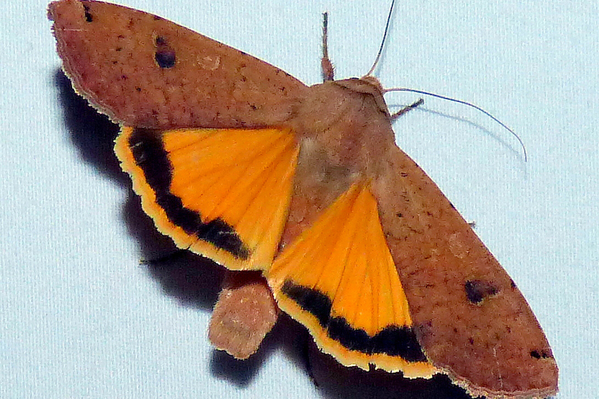 Color photo of a moth