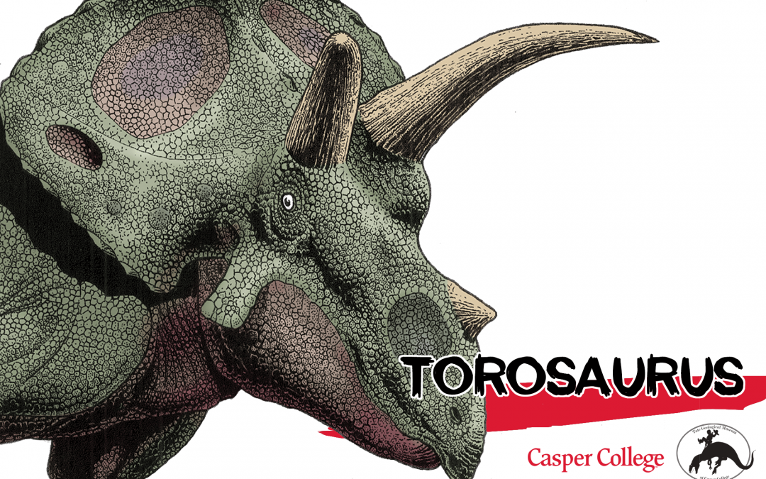 Rare Torosaurus skull debuts at Tate