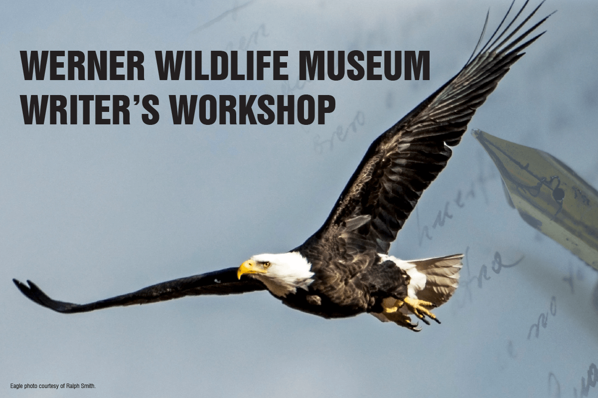"Photograph of an eagle flying with the words""Werner Wildlife Museum Writer's Workshop."""
