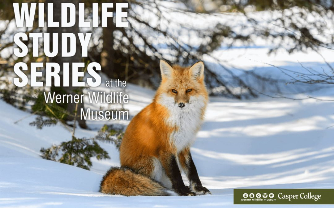 How wildlife survive winter topic of November study series