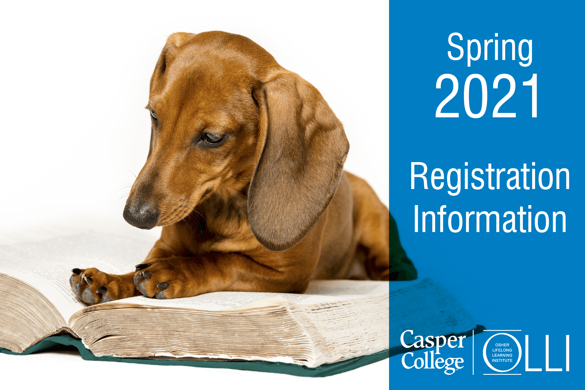 """Photo of a dachshund with a book and the words """"Spring 2021 Registration Information."""""""
