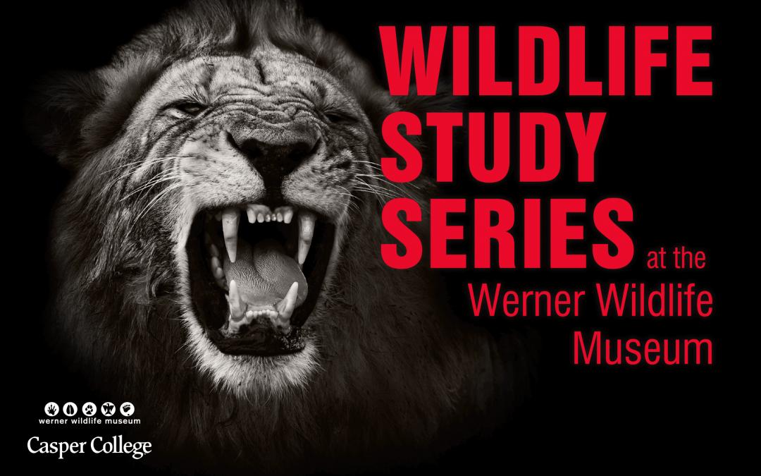 Mammal teeth clues subject of February presentation