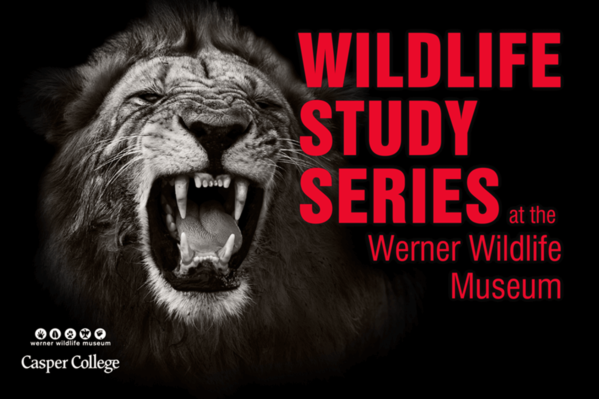 """Image of roaring lion with the words """"Wildlife Study Series."""""""