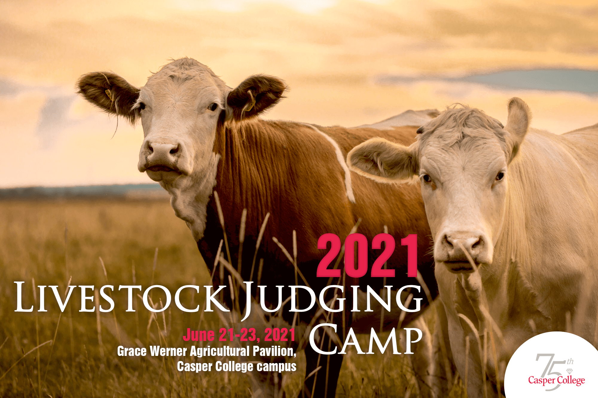 """Image of two cows with the words """"Livestock Judging Camp."""""""