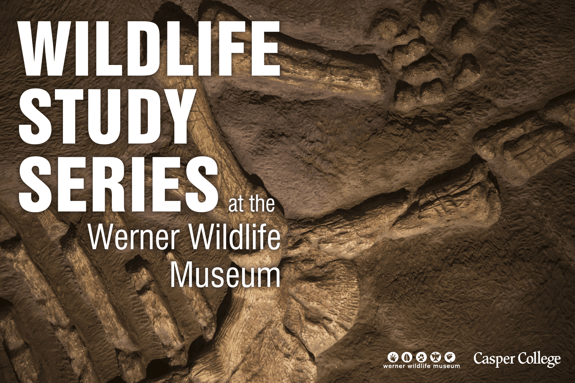 """Image of fossil bones with the words """"Wildlife Study Series."""""""