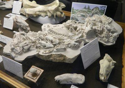 7-oligocene