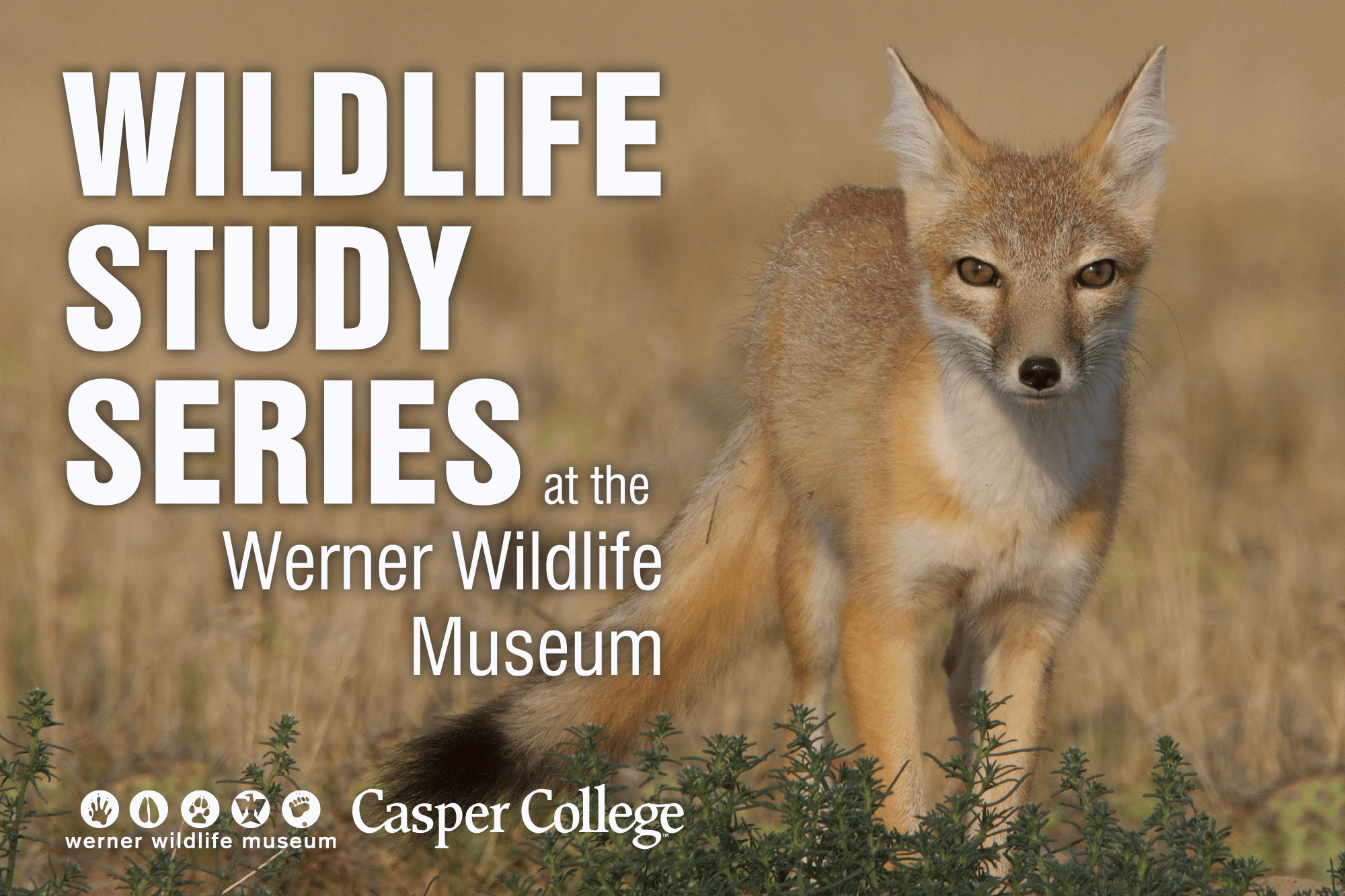 Photo of fox with the words Wildlife Study Series